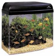 Aquarium Guys