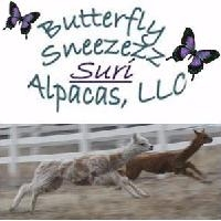 Butterflly Sneezezz Suri Alpacas